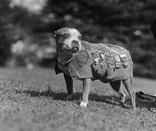стъби-кучето-войник-истории